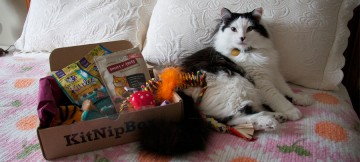 KitNipBox  Subscription Box Review and Information